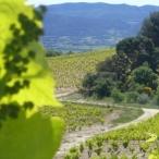 sentier-viticole-printemps